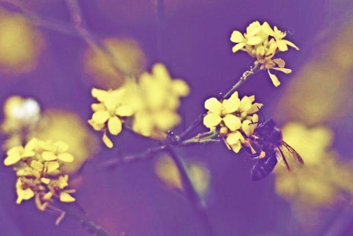 Η μεγάλη συμμετοχή φυτών στη διαμόρφωση του ελληνικού μελιού
