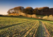 Το νέο αγροτικό νομοσχέδιο θέτει σε εφαρμογή το «πράσινο Brexit»
