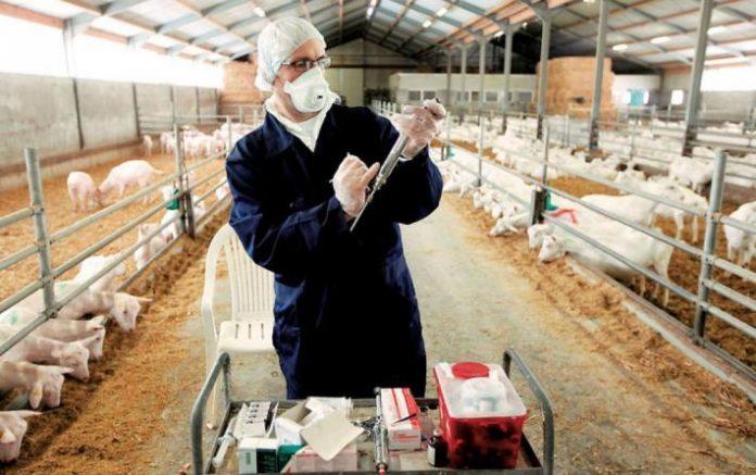 Ο ΣΕΚ στηρίζει τον θεσμό του κτηνιάτρου εκτροφής και ζητά στελέχωση των υπηρεσιών