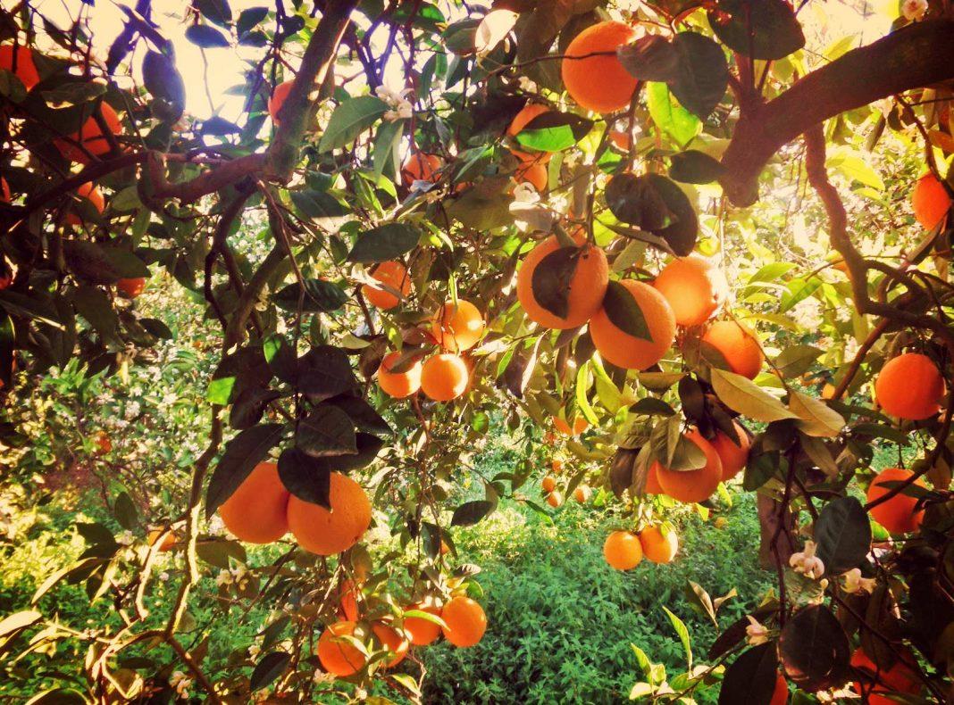 portokali-dentro