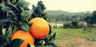 portokali-valentsia