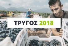 xinomauro-trygos-2018