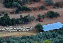Αναγκαία η ρύθμιση των χρεών πτηνοτρόφων και κτηνοτρόφων, λέει ο ΣΕΚ