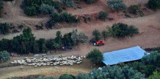 Στον ΕΛΟΓΑΚ διαμαρτυρήθηκαν κτηνοτρόφοι της Κεντρικής Μακεδονίας