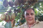 Ακτινίδιο: «Να μη βιαστούν οι παραγωγοί με πρόωρες κοπές»