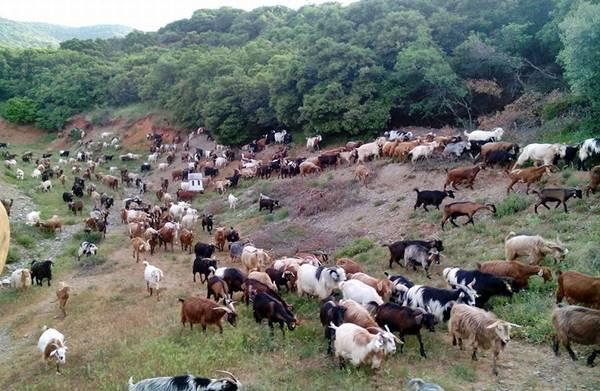 Π. Τατούλης: «Δεν σας επιτρέπω με «τερτίπια» να καταστρέψετε την Αγροτική Οικονομία της Πελοποννήσου»