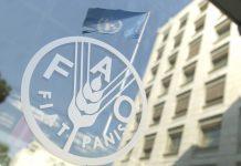 FAO Οργανισμός Τροφίμων και Γεωργίας των Ηνωμένων Εθνών