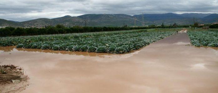 Και οι αγρότες της Αργολίδας μετρούν τις πληγές τους από τον Ζορμπά (φωτός)