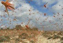 Απέδωσαν τα μέτρα για κάμπιες και ακρίδες στην Κοζάνη