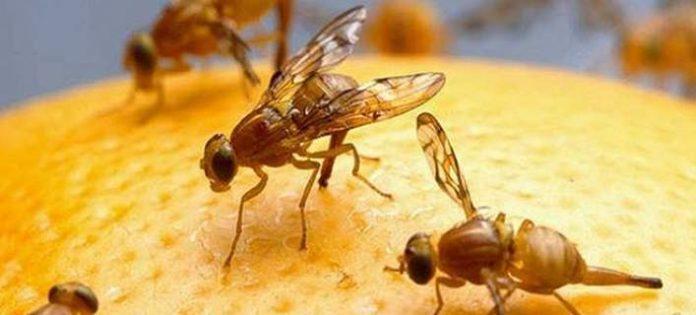 Αυστραλία: Νέα τεχνολογία προειδοποιεί τους αγρότες πού υπάρχουν παράσιτα