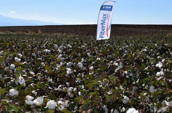 Η BASF Ελλάς δίνει ολοκληρωμένες λύσεις στον Έλληνα παραγωγό, με τις ποικιλίες βαμβακιού FiberMax® και Stoneville