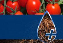H Bayer υποστηρίζει τους παραγωγούς με μία ευρεία γκάμα ολοκληρωμένων αγρονομικών λύσεων