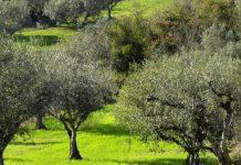 Ημερίδα για την Προώθηση του ΕλαιοΤουρισμού στην Κρήτη