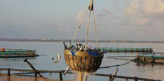 ΕΠΑλΘ 2014-2020: Με διαδικασίες εξπρές οι ετοιμασίες για την προκήρυξη νέων μέτρων