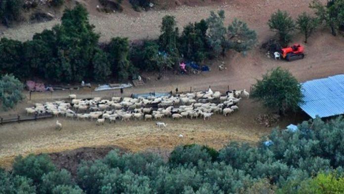 Άκαρπες οι έρευνες για τον εντοπισμό κτηνοτρόφου που αγνοείται στον Αλμυρό Βόλου