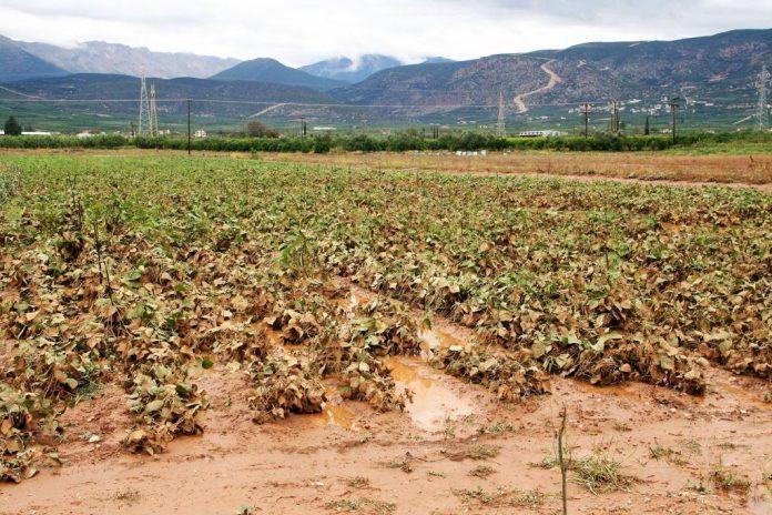 Καταγραφή ζημιών της αγροτικής παραγωγής στην Πελοπόννησο από την πρόσφατη κακοκαιρία ζητάει ο Περιφερειάρχης