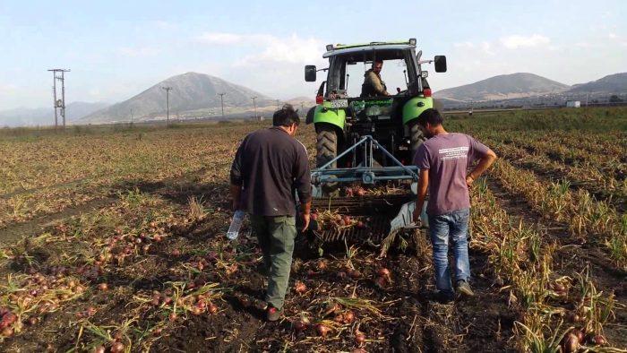 Χαμηλή παραγωγή και ακριβές εισαγωγές δίνουν προβάδισμα στα εγχώρια κρεμμύδια