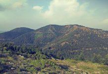 Στη Μεσσηνία δύο νέοι πρωτοπορούν στα αρωματικά φυτά