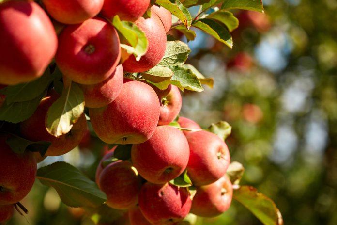 Αυξημένη παραγωγή αναμένει η Ζαγορά, άτυπο καρτέλ καταγγέλλουν στην Εορδαία