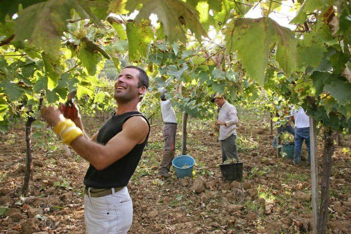 Τον μεγαλύτερο αριθμό νέων αγροτών με ενεργό συμμετοχή στην αγροδιατροφική αλυσίδα διαθέτει η Ιταλία.