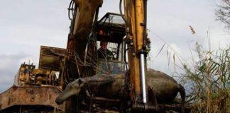 Πέντε νεκρά άλογα βρέθηκαν σε κανάλι του Δέλτα Έβρου