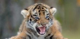 Ο πλανήτης μας έχασε το 60% του πληθυσμού των άγριων ζώων σε διάστημα 40 ετών
