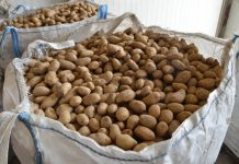 Κατάσχεση και καταστροφή 2,6 τόνων πατάτας στον Πειραιά