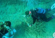 Σημαντική απειλή για την πίνα στις ελληνικές θάλασσες