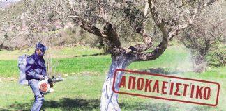 dakoktonia_apoklistiko