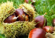 Εσπερίδα με θέμα τα προβλήματα στην καλλιέργεια της καστανιάς στα Παλαιά Ρουμάτα Χανίων