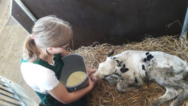 Η κτηνοτροφική μονάδα «Hohe» στη Γερμανία