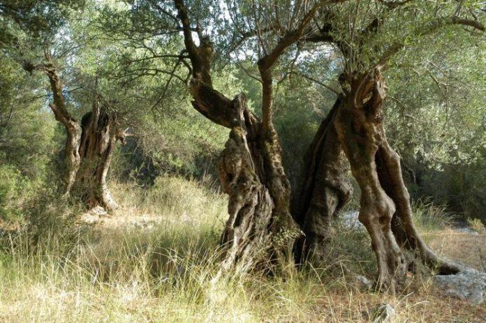 Σε κινητοποιήσεις και οι αγρότες της Κέρκυρας
