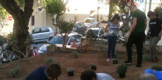 Μαθητές φύτεψαν αρωματικά φυτά στην είσοδο της Π.Ε. Λασιθίου