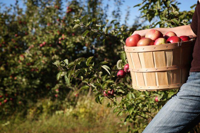 η σημερινή παραγωγή φρούτων, λαχανικών και πρωτεϊνών δεν αρκεί για να καλύψει τις διατροφικές ανάγκες του παγκόσμιου πληθυσμού
