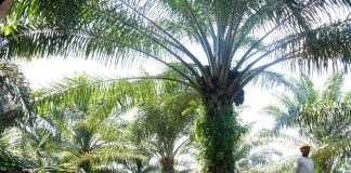 Αυστηρές απαιτήσεις της Mondelez από τους προμηθευτές φοινικέλαιου