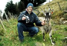 nofence φράχτης κτηνοτροφία στην Νορβηγία