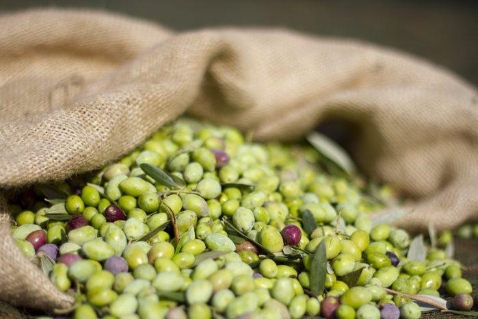 Στην Αθηνοελιά, η μείωση της παραγωγής εκτιμάται στο 60% και στην Κορωνέικη στο 50%