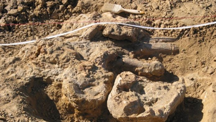 Προϊστορικός χαυλιόδοντας δύο μέτρων εντοπίστηκε στο ορυχείο της ΔΕΗ Αμυνταίου
