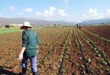 Προσλήψεις ζητούν οι γεωπόνοι της ΠΟΓΕΔΥ για την εύρυθμη λειτουργία των υπηρεσιών