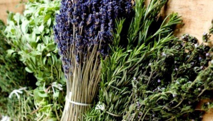 Προχωρά η δημιουργία του Ορεινού Βοτανικού Κήπου στη Δωρίδα