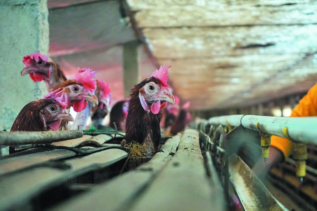 Τα µυστικά ενός σύγχρονου και βιώσιµου πτηνοτροφείου