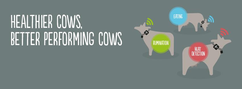ανίχνευση οιστρογόνων και προβλημάτων υγείας στις αγελάδες γαλακτοπαραγωγής.
