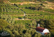 Κρήτη: Νέο Διοικητικό Συμβούλιο για το Δίκτυο Οινοποιών Ηρακλείου