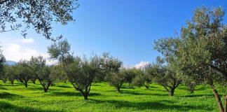 Αίτημα παραγωγών Δ. Ελλάδας στον ΕΛΓΑ για αποζημίωση