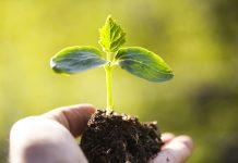 Αυξάνονται οι επενδύσεις στα βιολογικά φυτοφάρµακα