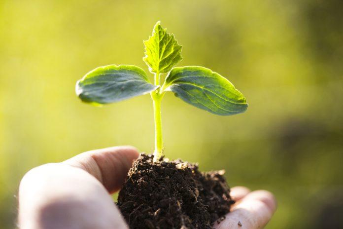 Προσωρινά αποτελέσματα αξιολόγησης αιτήσεων για την ενίσχυση της Βιολογικής Γεωργίας