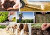 Αύξηση 3,5% για το κόστος παραγωγής σε γεωργία και κτηνοτροφία τον Οκτώβριο του 2018