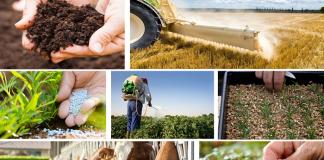 Κόστος παραγωγής: Αύξηση 1,2% σε γεωργία και κτηνοτροφία τον Φεβρουάριο του 2019 σε σύγκριση με το 2018