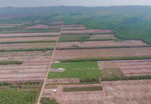 «Ένοχη» η καλλιέργεια σόγιας για την αποψίλωση των δασών