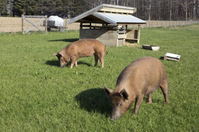 σύνδεση μεταξύ αγροτικής πολιτικής και καλής μεταχείρισης των ζώων